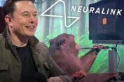 La scimma di Elon Musk per il progetto Neuralink